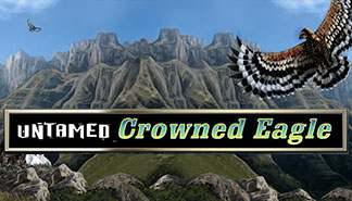 Untamed Crowned Eagle Microgaming spilleautomater thumbnail